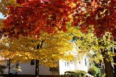 Fall color. Various fall color in Atlanta, Georgia royalty free stock image