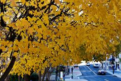 Fall color. Various fall color in Atlanta, Georgia stock image