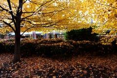 Fall color. Various fall color in Atlanta, Georgia stock photo
