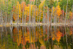 Fall Color in the Adirondacks Stock Images