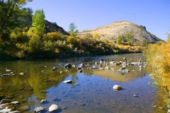 Fall Color Along The Truckee River Royalty Free Stock Photos