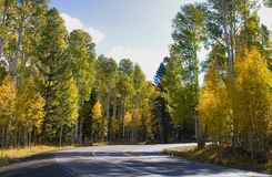 Fall color arizona. Beautiful fall color in flagstaff arizona Royalty Free Stock Photography
