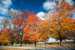 Free Fall Color At Oatlands Royalty Free Stock Image - 61608436