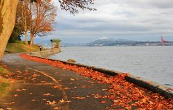 Fall Color, Autumn leaves, City Landscape in Stanley Paark, Downtown Vancouver, British Columbia Stock Image