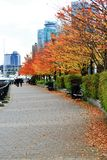 Fall Color, Autumn leaves in Coal Harbour, Downtown Vancouver, British Columbia Stock Image