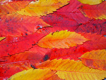 Fall Color Background Royalty Free Stock Photography