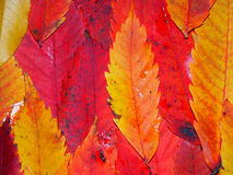 Fall Color Background Stock Photos