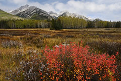 Fall Color in Canadian Rockies Royalty Free Stock Image