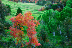 Free Fall Color Change Royalty Free Stock Photography - 21804457