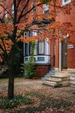 Fall color in Charles Village, Baltimore, Maryland.  royalty free stock images