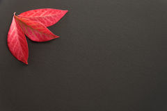 Fall color on a clean background Royalty Free Stock Photo