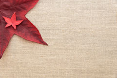 Fall color on a clean background Royalty Free Stock Image