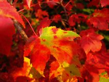 Fall color closeup royalty free stock images