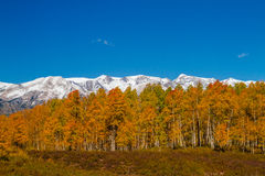 Fall Color in Crested Butte Colorado Stock Images