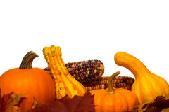 Fall Color Decor with Gourds and Pumpkins and Corn royalty free stock photos