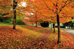 Fall color in deer lake park Stock Photography
