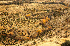 Fall color in a desert Canyon Stock Image