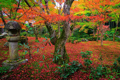 Fall color at Enkoji garden, Kyoto. Fall color of red maple foliage at Enkoji temple garden in Kyoto, Japan Royalty Free Stock Image