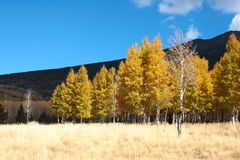 Fall color flagstaff arizona. Beautiful fall color in snow bowl, flagstaff, Arizona, 200710 Royalty Free Stock Photo