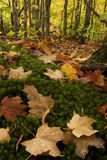 Fall color on Forest Floor Stock Photos