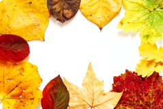 Fall color frame Stock Photography