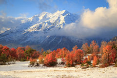 Fall color with fresh snow in the Wasatch Mountains. Stock Image