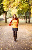 Fall color harmony. Royalty Free Stock Photo