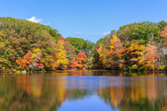 Fall foliage near water. Fall color is in full force in seekonk massachusetts on a gorgeous Autumn day Stock Images