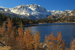 Fall color at June Lake, California, USA.. Royalty Free Stock Image