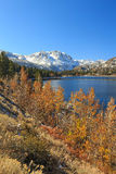 Fall color at June Lake, California, USA.. Stock Image