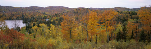 Fall color, Laurentian Mountains, Quebec, Canada Royalty Free Stock Images