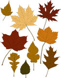 Fall Color Leaves. 9 different autumn leaves ideal for fall promotions or greeting cards Stock Photo