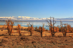 Fall color at Mono Lake, California, USA.. Royalty Free Stock Photos