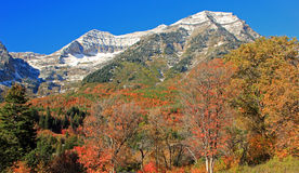 Fall color on Mount Timpanogos. Stock Photo