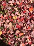 Fall Color Stock Photography