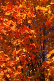 Fall Color in New England Royalty Free Stock Photo