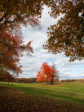 Fall color at Oatlands Royalty Free Stock Images