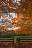 Fall color at Oatlands Royalty Free Stock Photo