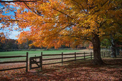 Fall color at Oatlands. Orange trees and fall color at the Oatlands Plantation, Leesburg, Va Royalty Free Stock Image