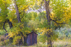 Fall color outhouse Stock Image