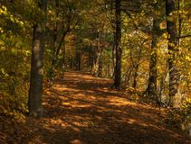 Fall Color Path Stock Images