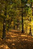 Fall Color Path - Vertical Royalty Free Stock Image