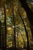 Fall color: Pinpoint of sunlight seen through the leaves of trees in the woods. Royalty Free Stock Photos