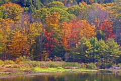 Fall color on pond upstate NY Royalty Free Stock Photo