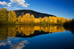 Fall color reflection on still water. Deciduous trees with bright yellow and orange fall colors are reflected in calm water of Easton Pond in Cascade Mountains Royalty Free Stock Photo