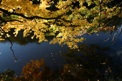 Fall color: reflection of tree branch and yellow leaves in water of stream. In Lansing, Michigan, USA stock images