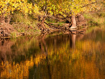 Fall Color Reflections Stock Images