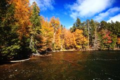 Fall Color River Bank Stock Image