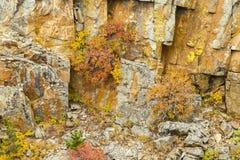 Fall Color Among The Rocks Stock Photos