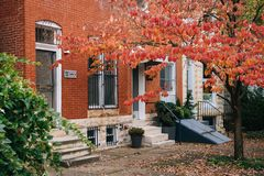 Fall color and row houses in Charles Village, Baltimore, Maryland.  royalty free stock image